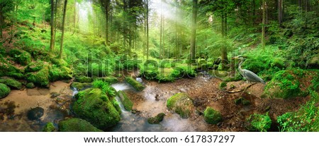 Enchanting panoramic forest scenery with soft light falling through the foliage, a stream with tranquil water and a heron #617837297