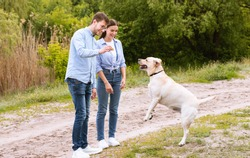 Encouragement Concept. Young couple playing with dog, guy feeding their jumping friend with treats, copy space