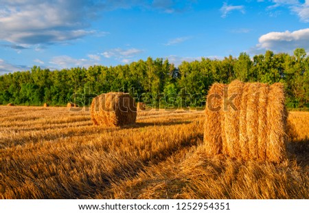 End of summertime.Hay bales on the field after harvesting illuminated by the last rays of setting sun.Summer country scene.Sunny landscape at sunset.Tula region,Russia #1252954351
