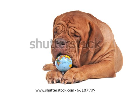 Endangered World Concept with Globe and Dog