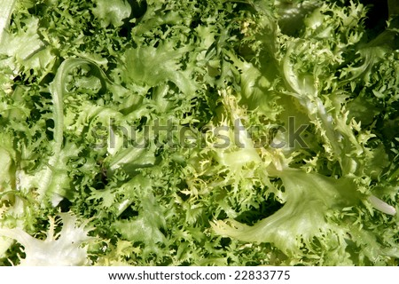 Endive - green vegetable similar to lettuce. Fresh vegetables background.