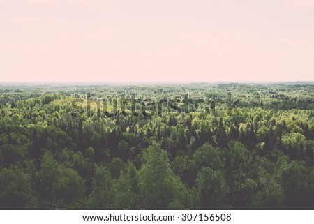endless forests in sunny day...