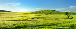 Endless Green Fields, Rolling Hills, Tractor Tracks, Spring Landscape under Blue Sky