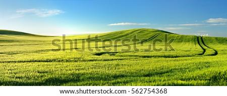 Endless Green Fields, Rolling Hills, Tractor Tracks, Spring Landscape under Blue Sky