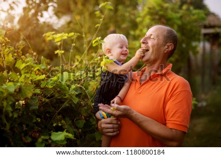 Endless love. Picture of grandfather and grandson in beautiful garden. Grandson is feeding his grandfather with grape.