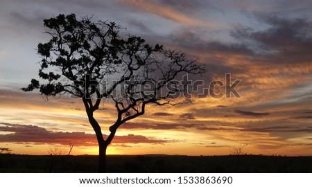 Endless plains of the Serengeti #1533863690