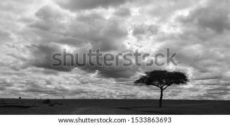 Endless plains of the Serengeti #1533863693