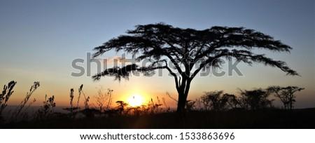 Endless plains of the Serengeti #1533863696