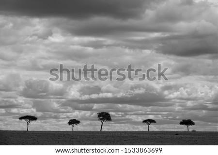 Endless plains of the Serengeti #1533863699