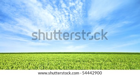 Endless wheat field in spring