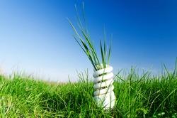 Energy-efficient spiral bulb in green grass