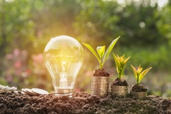 Energy saving light bulb and tree growing on stacks of coins on nature background. Saving, accounting and financial concept.