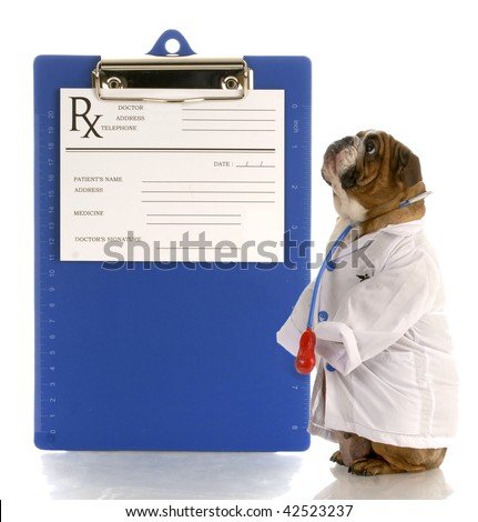 english bulldog dressed up as a doctor or veterinarian with prescription pad