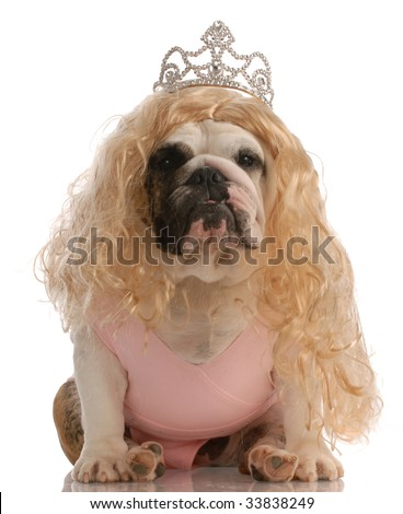 english bulldog dressed up as princess with ugly wig and tutu - stock photo