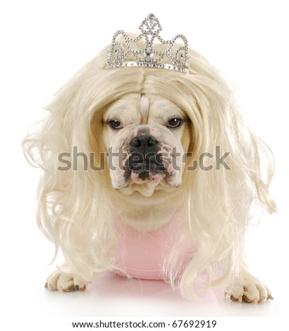 english bulldog dressed up like a princess with reflection on white background