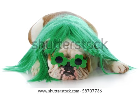 english bulldog dressed up with green wig and glasses for St. Patricks Day