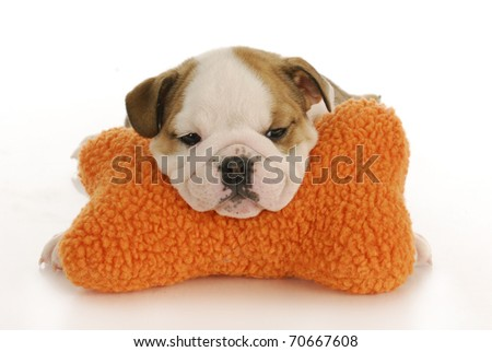 english bulldog puppy resting head on stuffed bone with reflection on white background