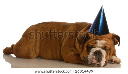 english bulldog wearing blue party hat on white background
