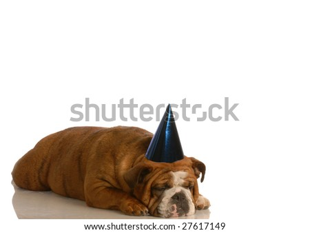 english bulldog wearing blue party with sad expression all alone