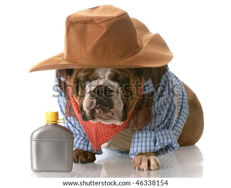 english bulldog wearing cowboy costume sitting beside whiskey flask