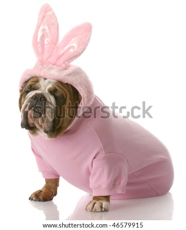 English Bulldog Easter Bunny