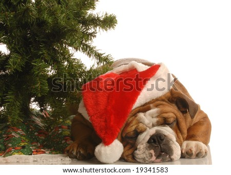english bulldog wearing santa hat sleeping under christmas tree