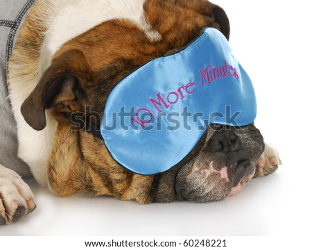english bulldog wearing sleep mask that says - ten more minutes - with reflection on white background