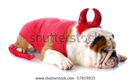 english bulldog with devilish expression in devil costume with reflection on white background - stock photo