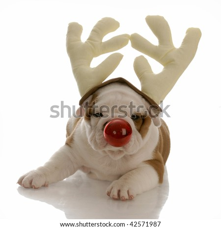 Bulldog rudolph under christmas tree dog breeds picture book covers
