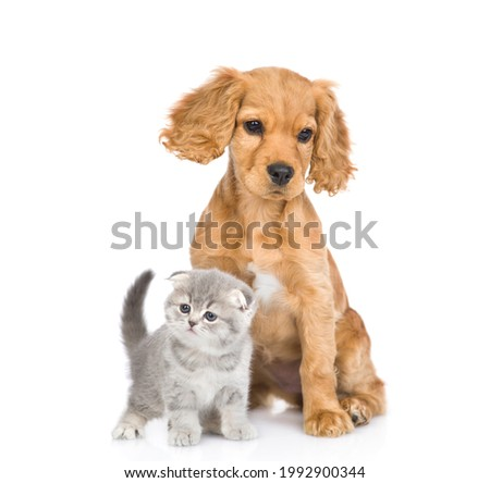 English cocker spaniel puppy dog and kitten sit together in front view. isolated on white background