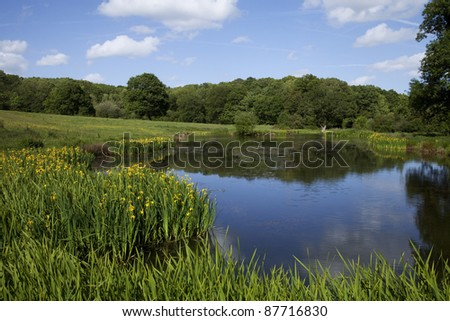English countryside landscape in summer, with a pond surrounded by green fields with trees in the background and a blue sky