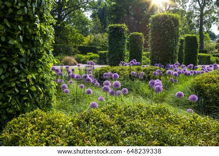 English garden with blooming alliums