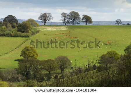 English landscape of fields and trees on a hill.  There are sheep in the field and it was taken in early spring before the trees are covered in leaves.  Taken in Surrey, England.