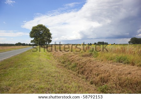 english landscape with country road sunflowers and oak tree