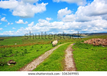 English landscape with fields with hills and sheep, Springtime