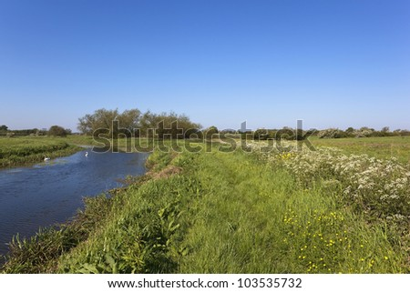 english landscape with wildflowers and lush grasses and reeds growing by a canal in summer under a clear blue sky