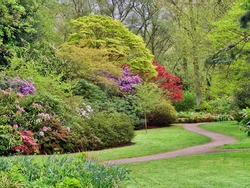 English Spring Garden with Acers