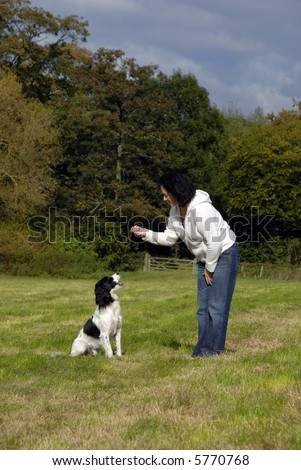 English springer spaniel being trained in a field by its young lady owner on a nice sunny day.
