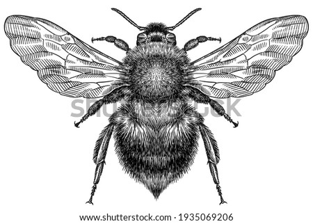 Engrave isolated bumblebee hand drawn graphic illustration Stock photo ©