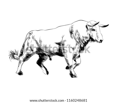 Engraved style illustration for posters, decoration and print. Hand drawn sketch of bull in black isolated on white background. Detailed vintage etching style drawing.