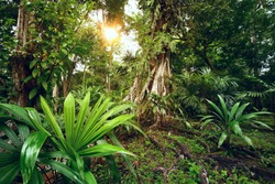 Enigmatic and mysterious rainforests of Central America. Guatemala
