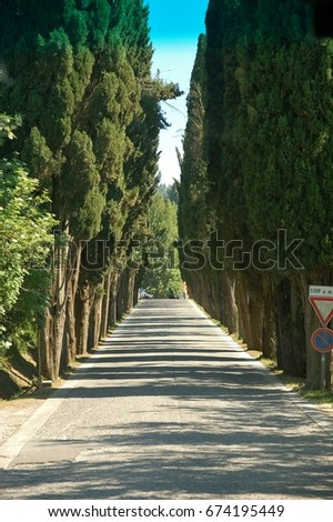 Enjoying the rural countryside of Tuscany in Italy  - Tall Italian cypress trees line a roadway #674195449