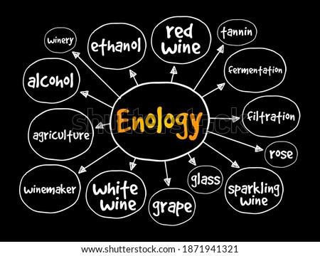 Enology mind map, concept for presentations and reports Foto stock ©