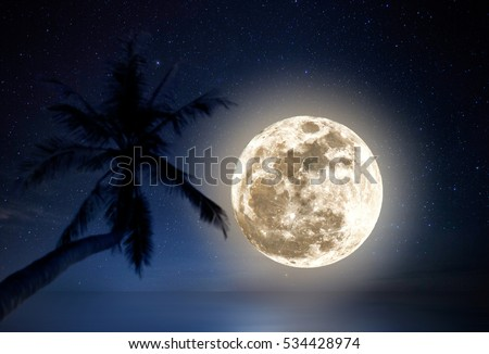 Enormous full moon above the horizon with out of focus coconut palm tree foreground.