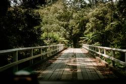 Entering the Jungle Book over a wooden bridge