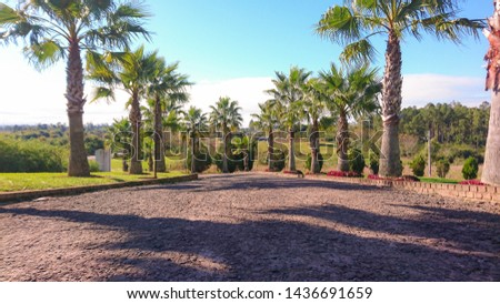 Entrance and exit of cars ornamented with palm trees. In the background the blue horizon. Paralepipedes road driving a garage from a family home. Ornamentation and beauty. #1436691659