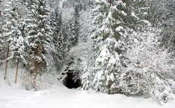 entrance into a cave at a snowy forest