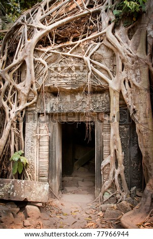Entrance to the ruin of the temple  covered by root of the tree, Angkor Wat, Cambodia