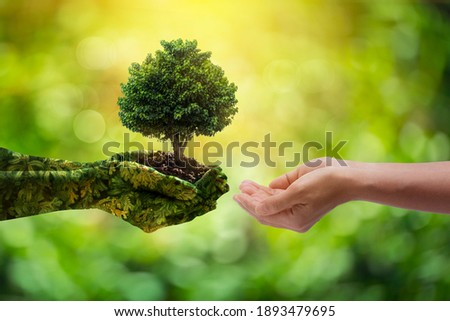 environment Earth Day Hands from nature. Girl hands holding trees growing on bokeh green background. Ecology and Nature concept.