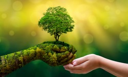 environment Earth Day In the hands of trees growing seedlings. Bokeh green Background Female hand holding tree on nature field grass Forest conservation concept
